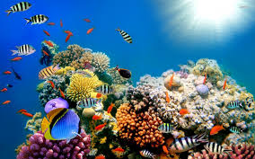 Our Coral Reefs are Dying!
